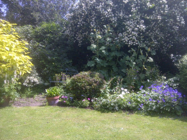 how to improve the flowering of your shrubs