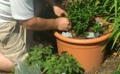 Using Ice Cubes to Help Your Plants Survive Hot Days